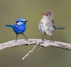 #eye_spy_birds: Stunning Birds Photography by Mike Ashbee
