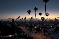 On Display #palm #fog #sunrise #street #trees