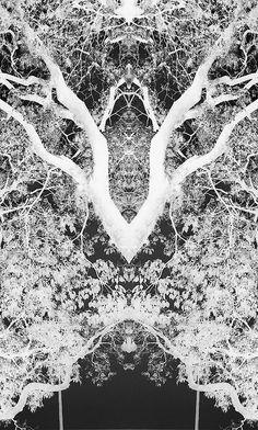 A Floresta #3