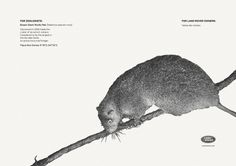 land-rover_bosavi_giant_wolly_rat.jpg (1417×1002) #advertising