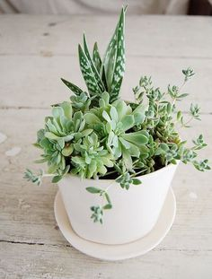Succulents. #plant #succulent