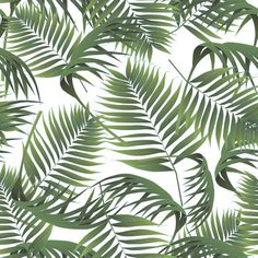 Palm #pattern #palm #tropical #plant #botany #botanical