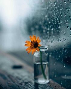 Stunning raindrops and the flower by Sarvesh Chaudhari