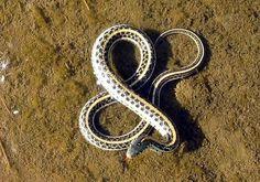jFCeL.jpg (500×350) #ampersand #typography #photography #snake