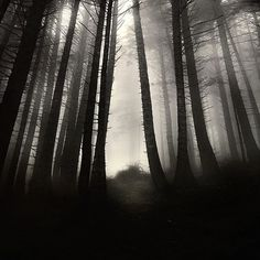 find me, photography by Ebru Sidar #forest #foog
