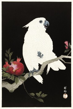 Cockatoo and pomegranate (1925 - 1936) by Ohara Koson (1877-1945). Original from The Rijksmuseum. Digitally enhanced by rawpixel.