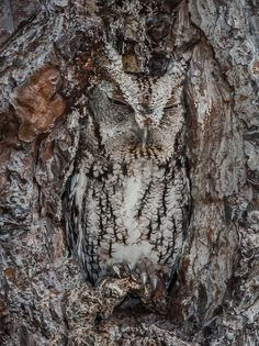 Wyniki Szukania w Grafice Google dla http://i.huffpost.com/gadgets/slideshows/293508/slide_293508_2369157_free.jpg?1366712578715 #illusion #owl #tree #photo #nature