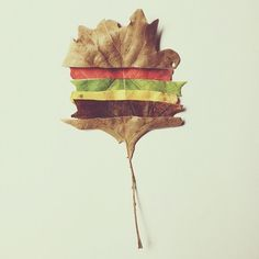 this fell off the cheeseburger tree today #autumn #fall #igers #cheeseburgertree #iphonesia