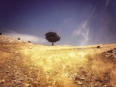 Egridir one tree hill | Flickr - David Walby #tree #egirdir #turkey #walby #photography #david #wall-b