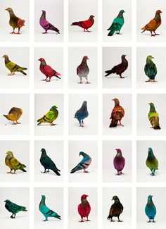 "Julian Charriere and Julius von Bismarck dyed some pigeons in Stockholm using a ""bird trap with a conveyor belt mechanism"" #pigeon #colors"