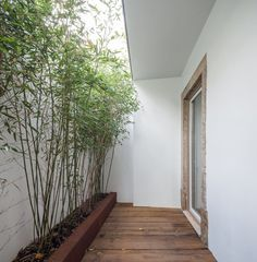 Small private patio. House in Necessidades by Fragmentos de Arquitectura. © Francisco Nogueira. #patio