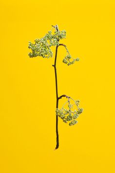 Blossom by Raw Color | PICDIT #photo #yellow #color #photography #colour #plant