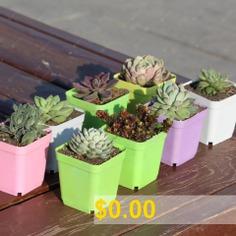 Colorful #Plastic #Square #Pot #Thick #Succulent #Planting #Pot #Greenhouse #Special #Small #Square #Bowl #Nursery #Pot #- #WHITE
