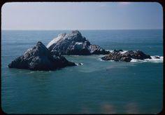 Seal Rocks. San Francisco. Mar. 26, 1952 #san francisco #rocks