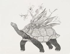 Tara Tucker - BOOOOOOOM! - CREATE * INSPIRE * COMMUNITY * ART * DESIGN * MUSIC * FILM * PHOTO * PROJECTS #turtle #illustration #drawing