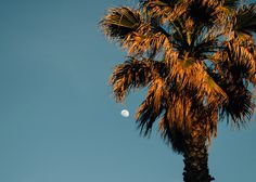 Tree, palm tree, moon and sky HD photo by Jānis Skribāns (@janisskribans) on Unsplash