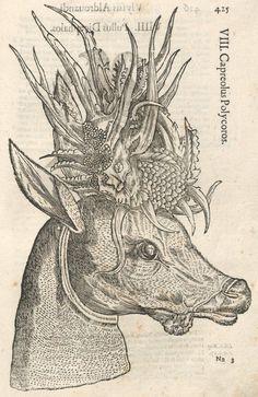 000435 #naturalism #aldrovandi #illustration #latin #ulisse #monster #drawing