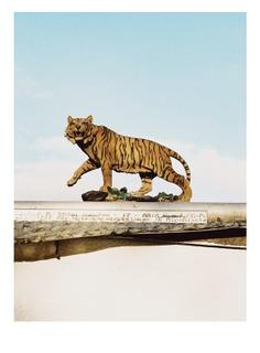 #cologne #cat #walk #scenography #location #setdesign PHOTOGRAPHIE © [ catrin mackowski ]