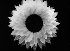 #gif #flower