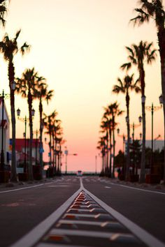 South Bay #beach #palm #road #trees #sunset #california