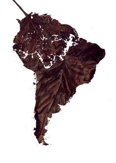 Dead Leaf #leaf #affiche #design #graphic #south #poster #cartel #america #great