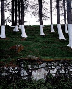 Zander Olsen's Tree Line Project | Trendland: Fashion Blog & Trend Magazine #photography #illusion #installation