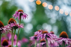 Wonderful bokeh flower by Julie