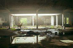 Theo Gosselin | iGNANT #photography