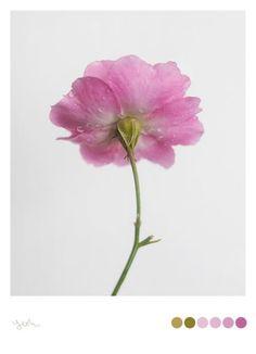 Yeohgh #flower #colour