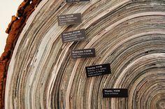 Tiffany Van Mooy: Story of the Tree Rings
