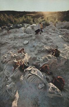 tumblr_lvk5z0yyiO1r7ny87o1_500.jpg (JPEG Image, 453×700 pixels) #dinosaur #paleontology #geograpic #national