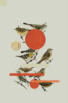 momentitus (Bird (by Dewey Saunders)) #birds #collage #orange