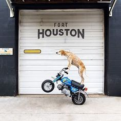 Instagram photo by thiswildidea - Poppin' wheelies alllll day!Getting pumped on hitting the road with this pup via motorcycle and sidecar #moto #dog