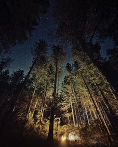 500px / Photo #forest #photography #trees