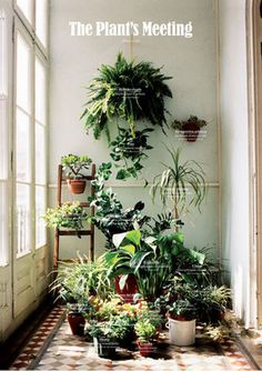 tumblr_mt8n5xy15H1r8crqao1_500.jpg 500×708 pixels #green #light #window #plants