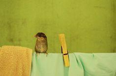 tiny baby #color #bird