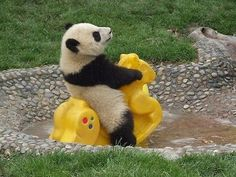 WEARETADO #panda #rocking