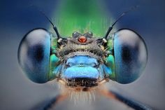 Macro Photography by Dusan Beno | Professional Photography Blog #inspiration #photography #macro