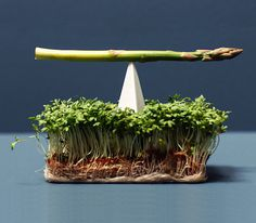 Varia — Design & photography related inspiration #photography #experimental #food