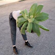 brookeplant.jpg
