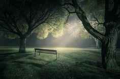 Flickr Finds No. 36 #light #trees #bench #park