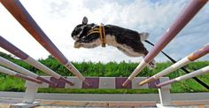 Google Image Result for http://msnbcmedia.msn.com/j/MSNBC/Components/Photo/_new/pb 110627 rabbit 7a.photoblog900.jpg #rabbit