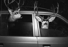 AGan Harahap - Safari #photo #deer #animal #safari