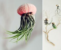 #planter #jellyfish