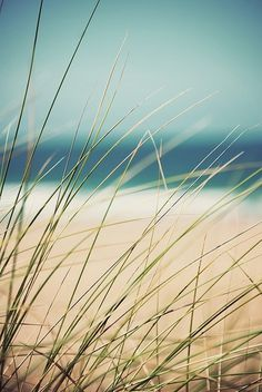 Merde! - Photography (Grass by Mike Stimpson on Flickr.... #photography