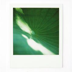 Arnaud Wacker #japan #polaroid #tokyo #sx70 #lotus
