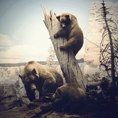 Chad Wys, Artist #bears #photography #animals