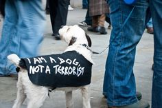 OWNI, News, Augmented #photo #terrorist #france #dog