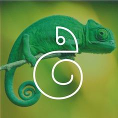 Chameleon Logo Concept 🦎