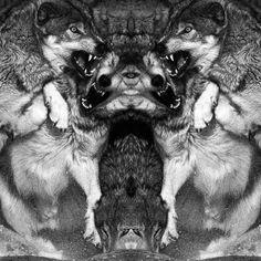 Cold Rockin #wolves
